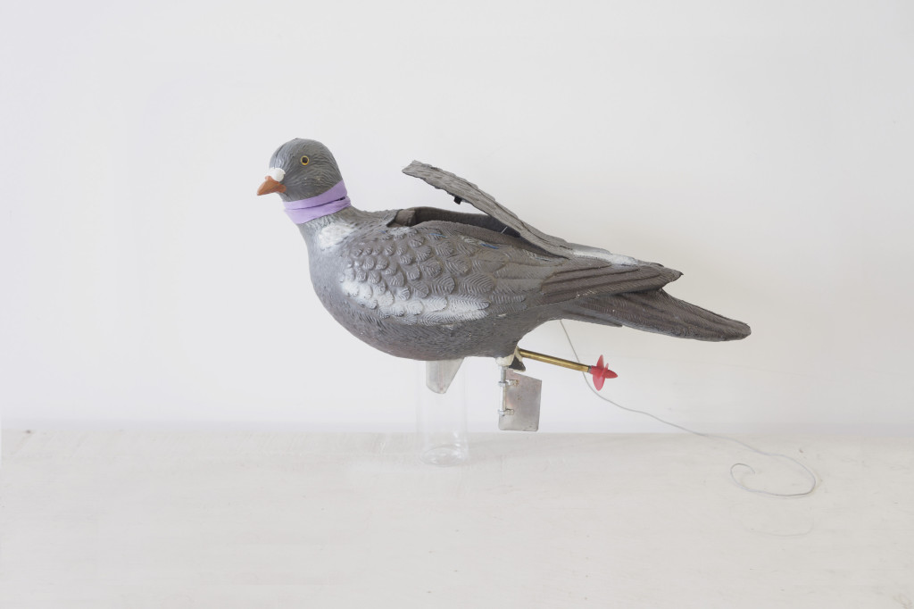 PigeonModifLighWebt